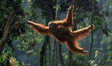 Egzotikus Ázsia: Borneo dr. Juhász Árpád előadása