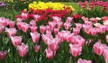 Tavasz az Egyetemi Botanikus Kertben