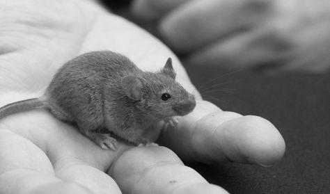Egerek és emberek