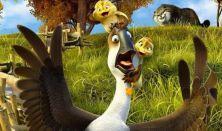 Jönnek a kacsák