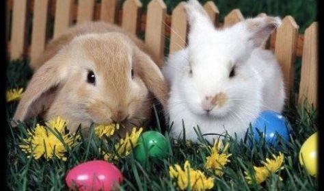 Húsvéti tojáskereső a Csokoládé Múzeumban