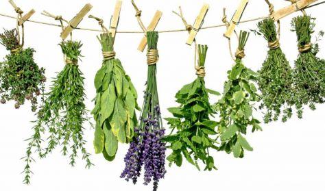 Gyógynövénytermesztés
