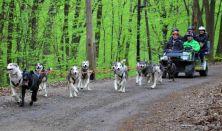 Husky Kutyafogat túra Európa-bajnok hajtóval 1 fő