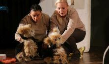 Bertalan és Barnabás - Aranyszamár Színház