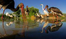 Máté Bence- vértelen vadászat - természetfotók kulisszatitkai a világ körül