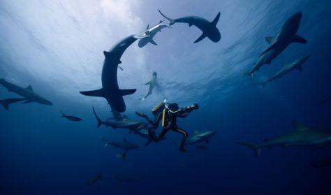 Békási Mozi Esték: A mélység kalandora