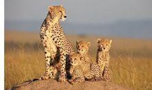 Afrikai macskák – A bátorság birodalma #Mozi.kert#