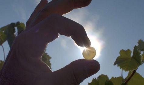 ÖSSZHANG: Folyékony arany (magyar felirattal)