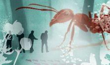 Hangyák - Walking Lecture on Ants
