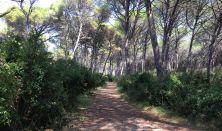 Duruzsol az erdő
