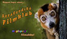 Sorsfordító Filmklub - Meglepetés filmekkel