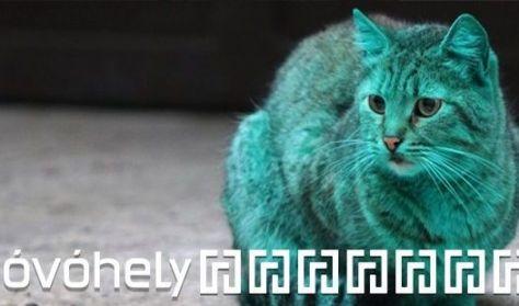A Zöld macska