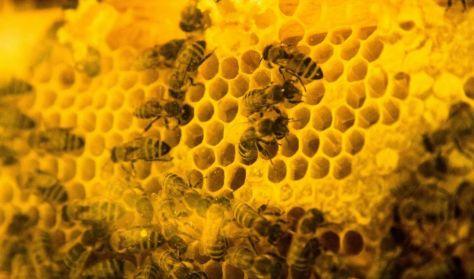 A mi méheink - A méheket középpontba helyező méhtartás