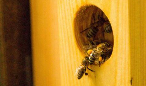 A mi méheink - A természetes méhészet szemlélete és gyakorlata