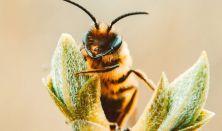 A mi méheink: A méhek és a környezet kapcsolata - A méhek tavaszi élete