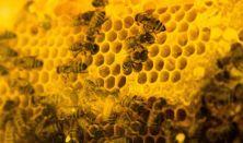 A mi méheink: A méhek különleges szociális organizmusa - A rajzás, a méhek társadalma, a méhek tánca