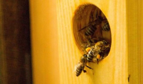 A mi méheink - Kaptárlátogatás