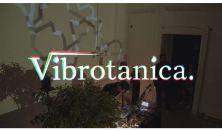 Vibrotanica (feat. Döbrösi Laura)