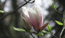 Tiszakürti Arborétum belépő - Családi kiegészítő jegy