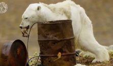 A jegesmedvék etetése tilos - Manna Produkció