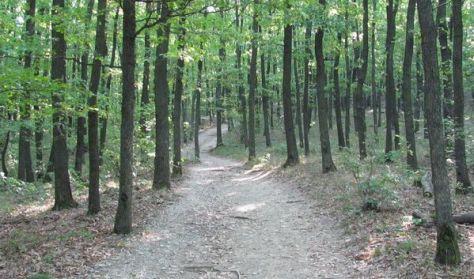 Átölel az erdő