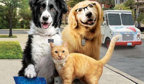 Kutyák és macskák 3.: A mancs parancs