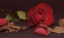 Georges Bizet: CARMEN opera