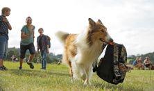 Békási Kertmozi: Lassie hazatér