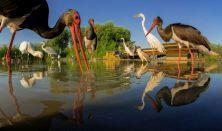 Máté Bence - vértelen vadászat - természetfotók kulisszatitkai a világ körül