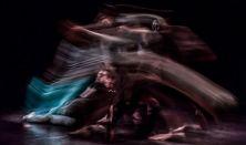 Willany Leó Improvizációs Táncszínház: #kaméleon